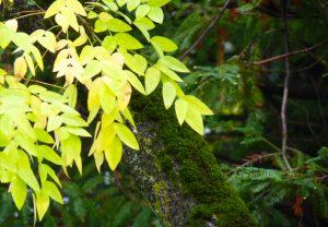 automne-f1-vert-jaune