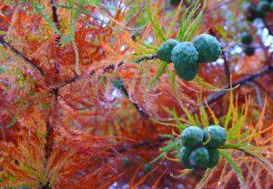 automne-f1-vert-rouge-03-noix-bleues
