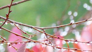 eau-gouttes-branches-automne-01