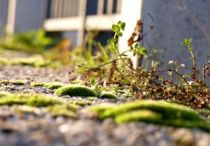 flore-mousse-gravier-plante