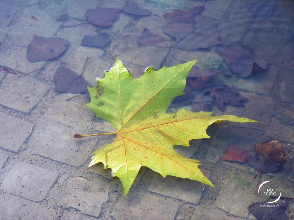 automne jaune et bleu