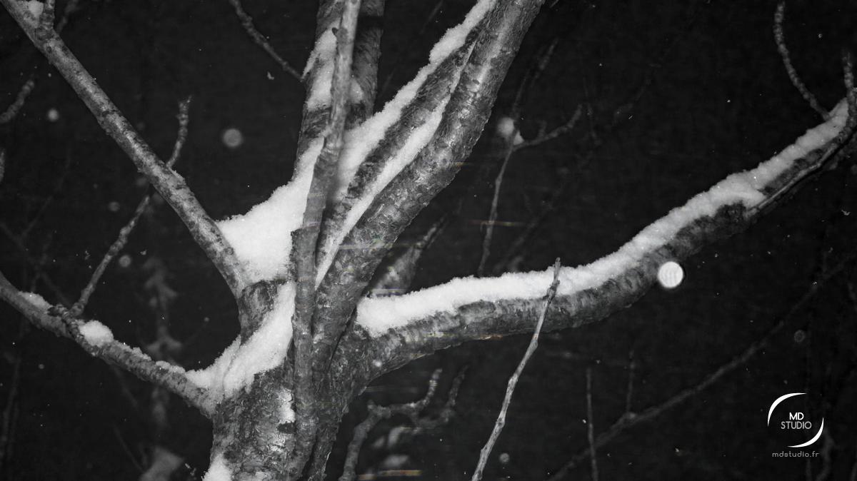 arbre sous la neige une nuit de février | photo MDstudio