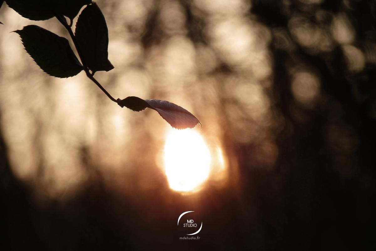 feuille caressant le soleil couchant | forêt Gétignoise | MDstudio