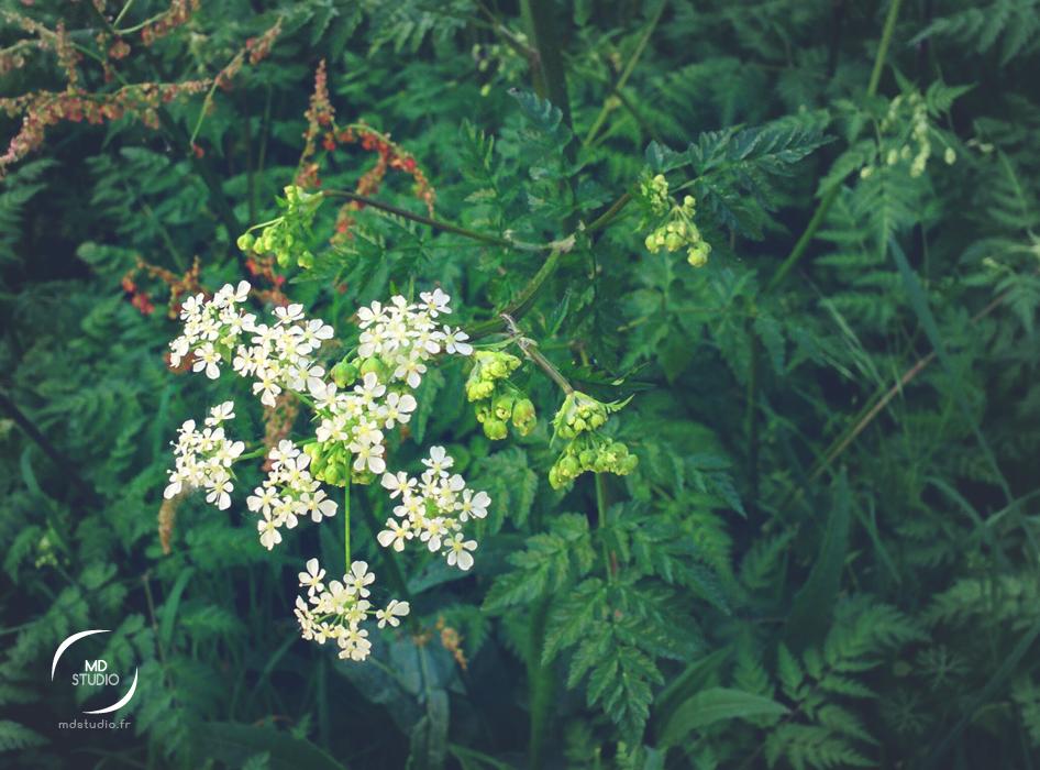 végétation en bordure de Loire à Nantes | MDstudio