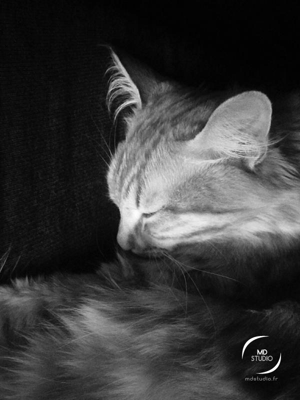 Petit chat endormi en niveau de gris | MDstudio