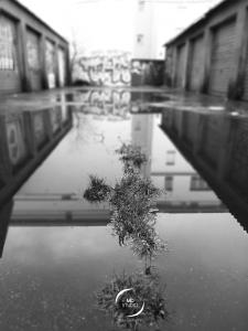 reflet de rue | vue 3 zoom premier plan | MDstudio