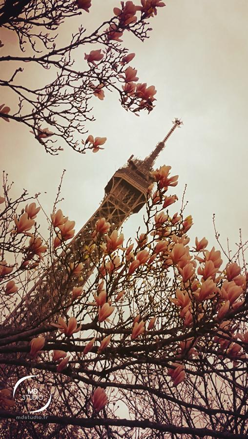 Tour Eiffel cernée de magnolia | jardin musée Branly | photo MDstudio