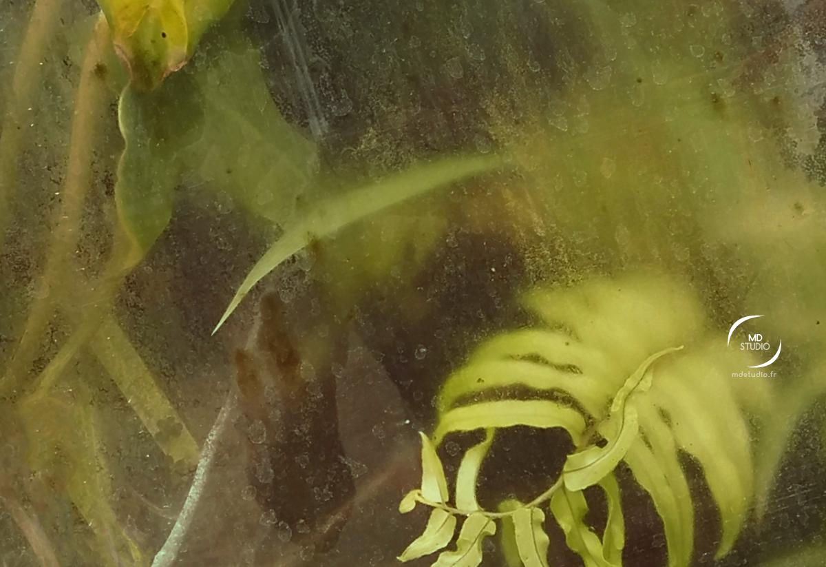 Plantes tropicales pressées contre la vitre d'une serre de jardin | photo MDstudio