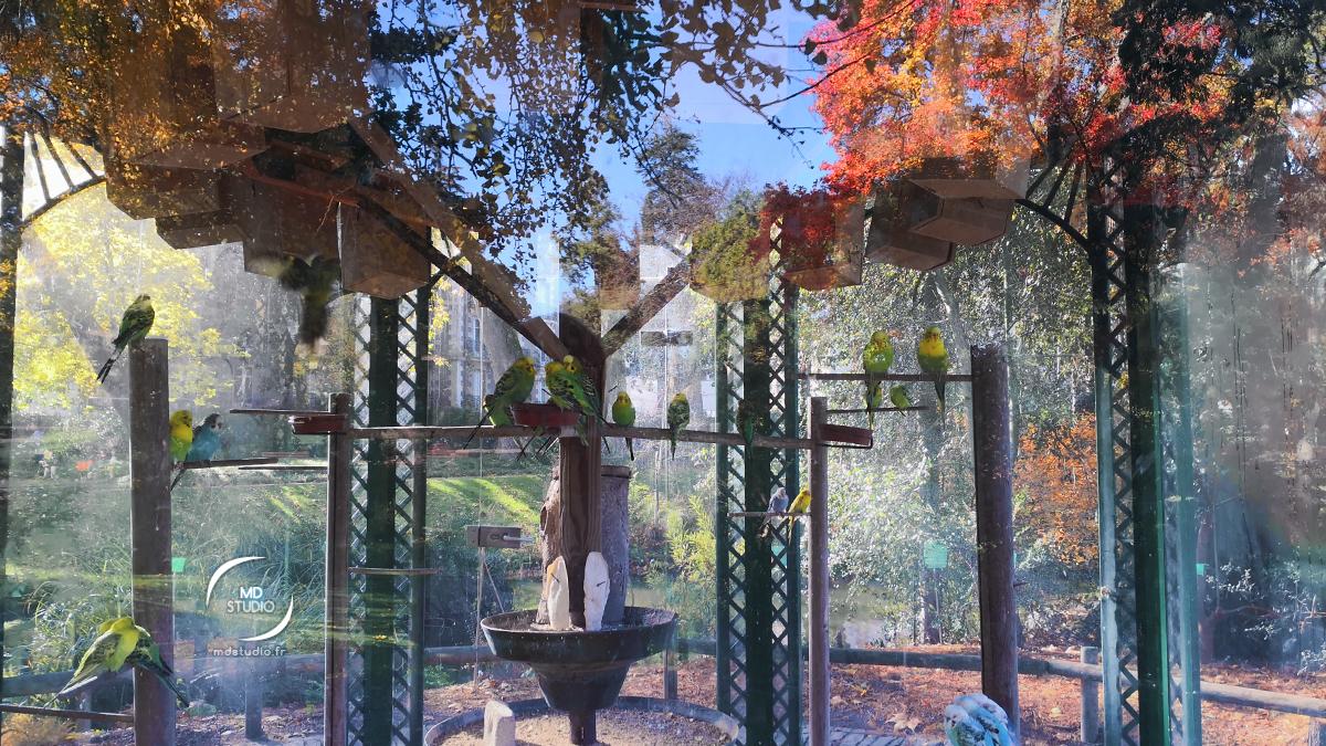 Volière de perruches ondulées à l'automne, Jardin des Plantes de Nantes | photo MDstudio