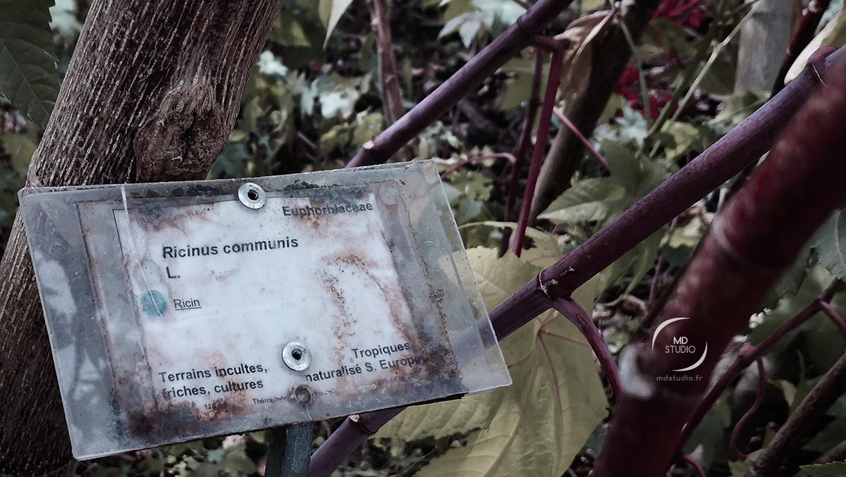 Ecriteau vieilli : Ricinius Communis ou Ricin commun | photo MDstudio | Jardin Botanique de Bordeaux