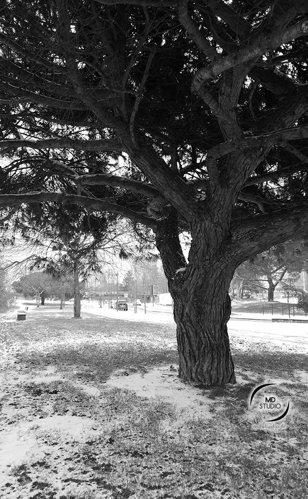 Pin sombre et neige claire | photo MDstudio