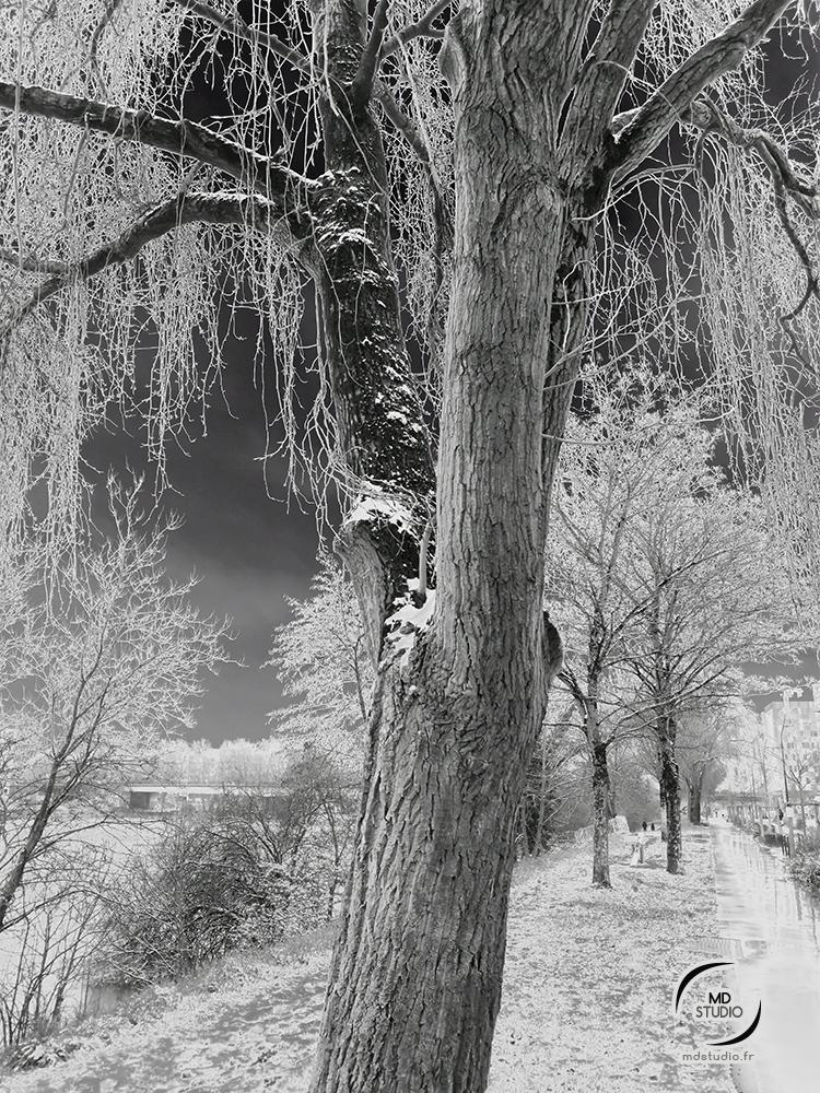 Arbres enneigés, effets solarisés | photo MDstudio