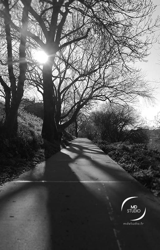 photographie en noir et blanc, vue d'un chemin en bord de Loire, contre-jour, ombre des branches sur le talus et l'asphalte | photo MDstudio